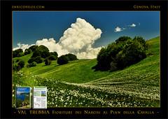 PASSEGGIATE A LEVANTE - VAL TREBBIA Narcisi al Pian della Cavalla 1 - ph Enrico Pelos