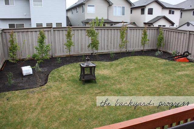 Backyard02