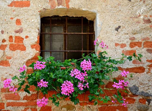 Finestra con fiori rosa flickr photo sharing for Finestra con fiori disegno