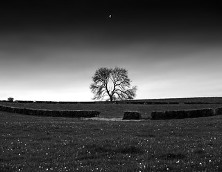A tree,a moon and a field full of stars