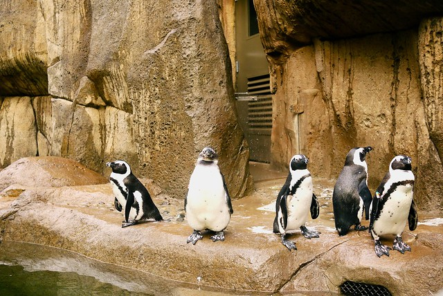 Penguin Point | Vancouver Aquarium