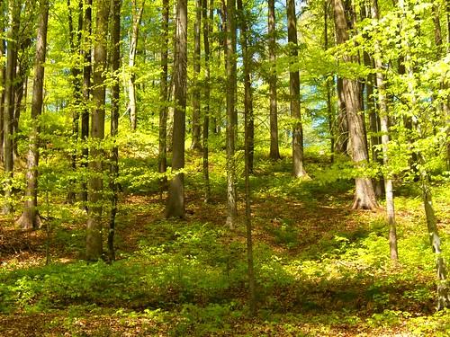 mostra parco verde primavera foglie calle arboretum gazebo slovenia pesci fiori piante autunno colori esposizione potok prati tulipani kamnik faggi volcji