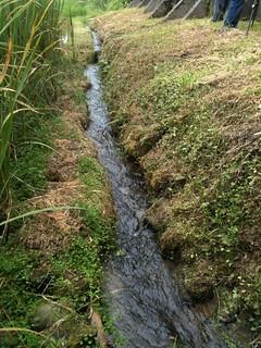 二重埔湧泉灌溉出優質米,居民細心維護,維持潔淨水源。