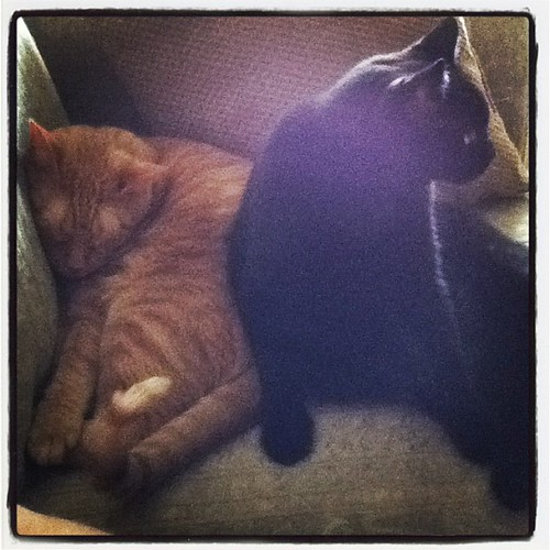 Logan attempting to lean on Seymore. #catsofinstagram #gingercat #blackcat