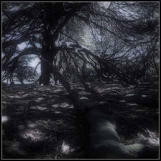 Yew Nights (2)