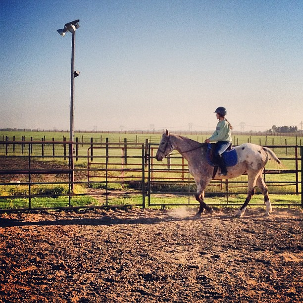 Back in the Saddle #horse #farm #Appaloosa