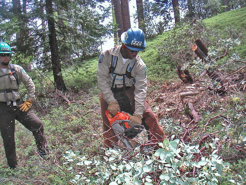 Javonnta Murphy and Troy Dorgeloh of the California Conservation Corps work to add 8 miles to the San Domingo portion of the Arnold Rim Trail in the Stanislaus National Forest in California. USFS photo.