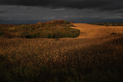 Corn fields in autumn