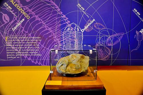 Museo de Paleontología (06)