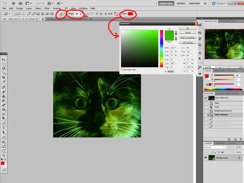 Зеленая виртуальная кошка 7054282999_1aa92eeeab_c