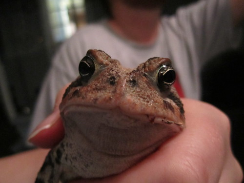 Rob Frog