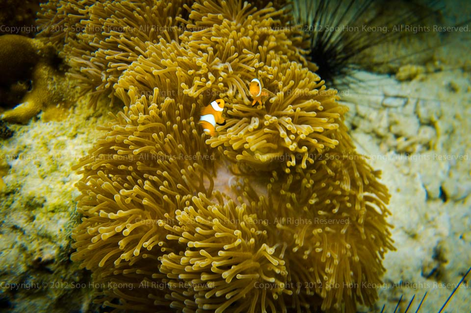 UnderWater (Nemo) @ Lipe Island, Thailand