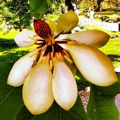 #botanical #garden #geneva