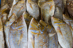 Fish Market, Dubai