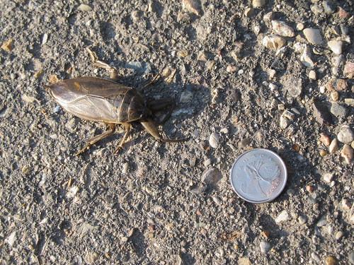 insect holycrap heebiejeebies toebiter