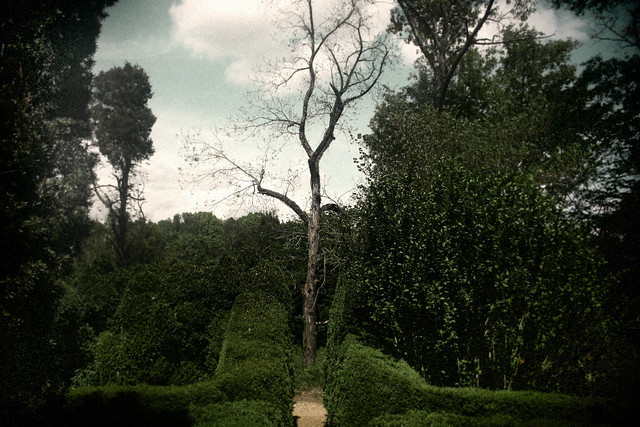 Tree and Path, Barnsley Garden, April, 2012