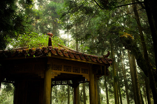 Forests of Alishan-10