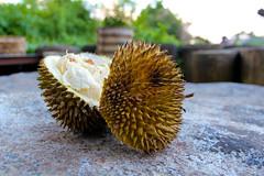 flower(0.0), plant(0.0), macro photography(0.0), produce(0.0), flora(1.0), fruit(1.0), food(1.0), durian(1.0), close-up(1.0),