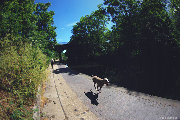 aliciasivert, alicia sivertsson, london, england, canal, waters, water, dog, run, running, hurry, kanal, hund, spring, springa, springer, bråttom