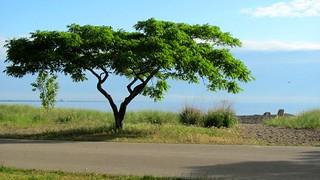 Image of Van Wagners Beach near Hamilton.