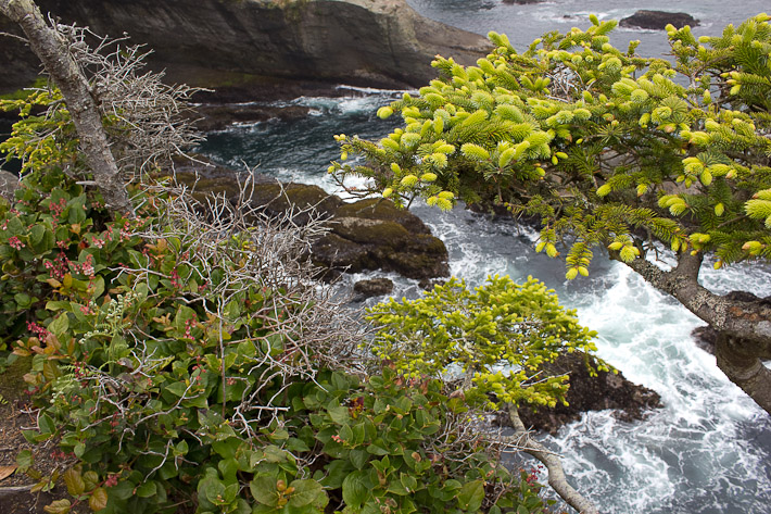 Neah Bay, Cape Flattery Trail.
