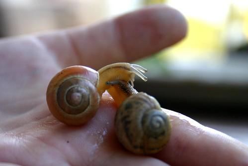 Snails' race I