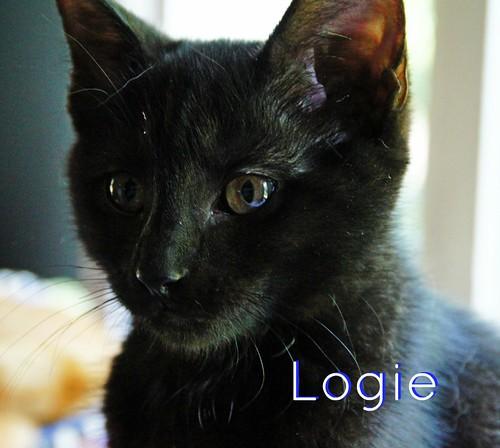 Logie