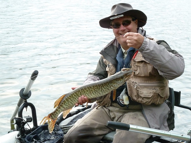 Tiger hunting with fly rod the caddis fly oregon fly for Tiger muskie fishing