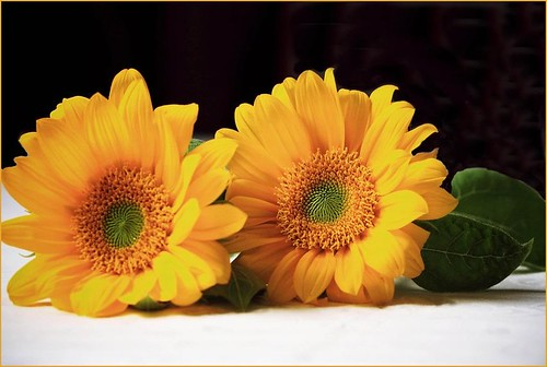 Sunflower  (Friends) by T.takako