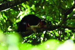Wildlife Photo Gallery