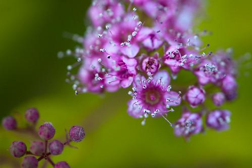034 flower
