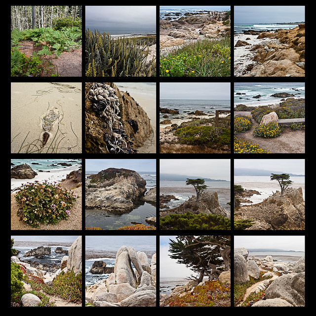 17-mile_drive_pebble_beach