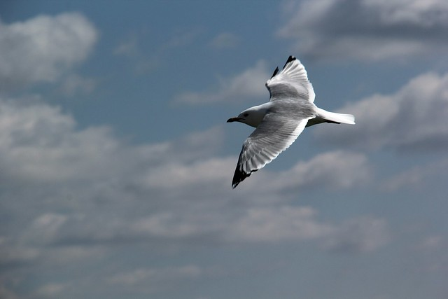 seagull floating by