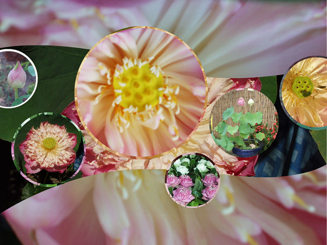 Fotor-lotus-collage-w