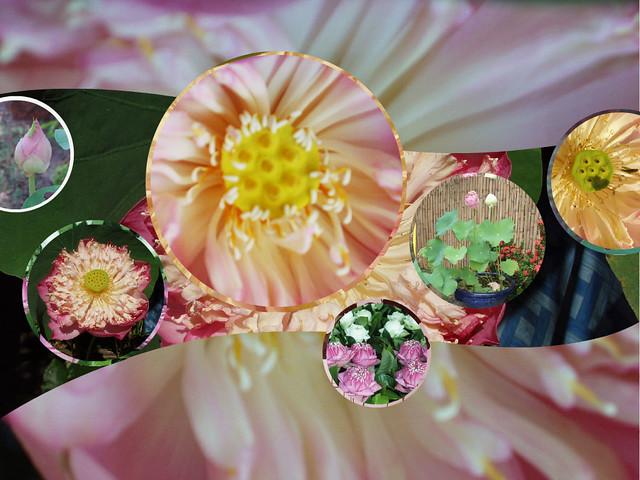Fotor-lotus-collage-w