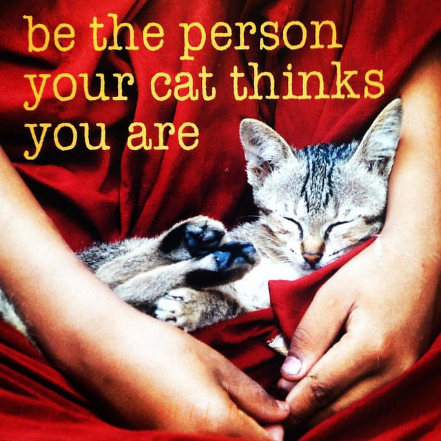 Wise words from a #postcrossing #postcard  #cat #motivation #lapcat