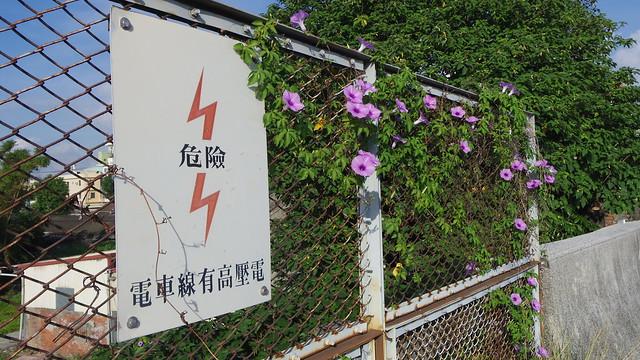 57-13-牽牛花