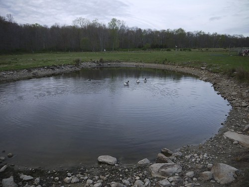 Pond from April 2012