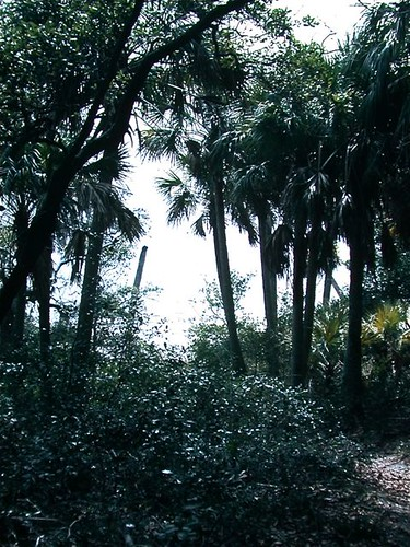 Path to Beach- Seahorse Key, FL