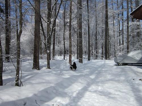 庭で遊ぶランディ/春の雪 2012年4月1日9:18 by Poran111