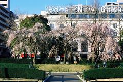 sakura and the Hotel