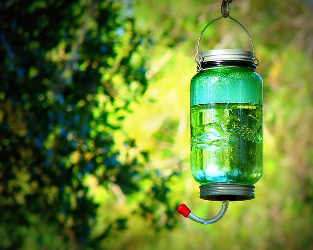 hummingfeeder