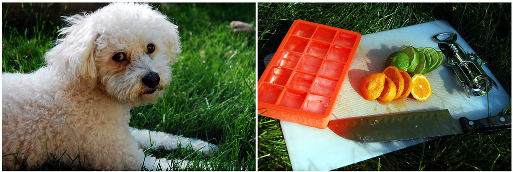 Pup and Cubes