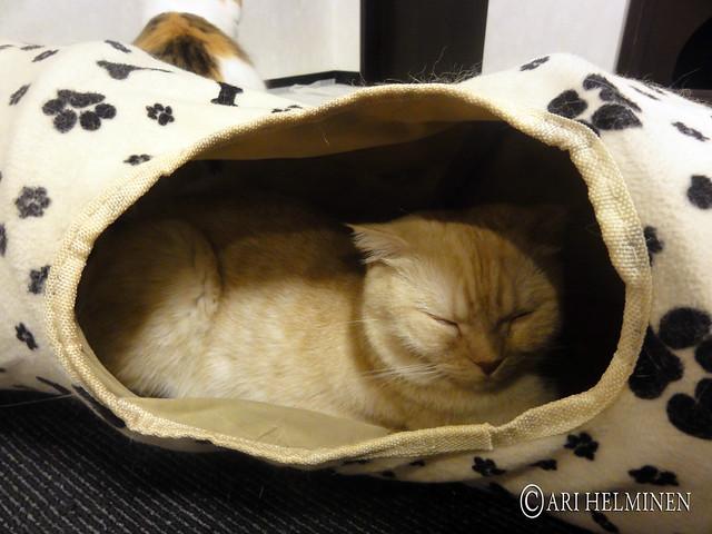 Cat Cafe Near Hiroo Station