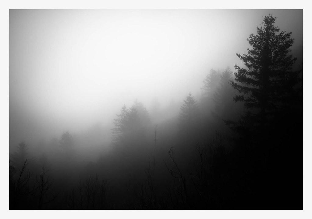 Limbo Trees 2 B&W