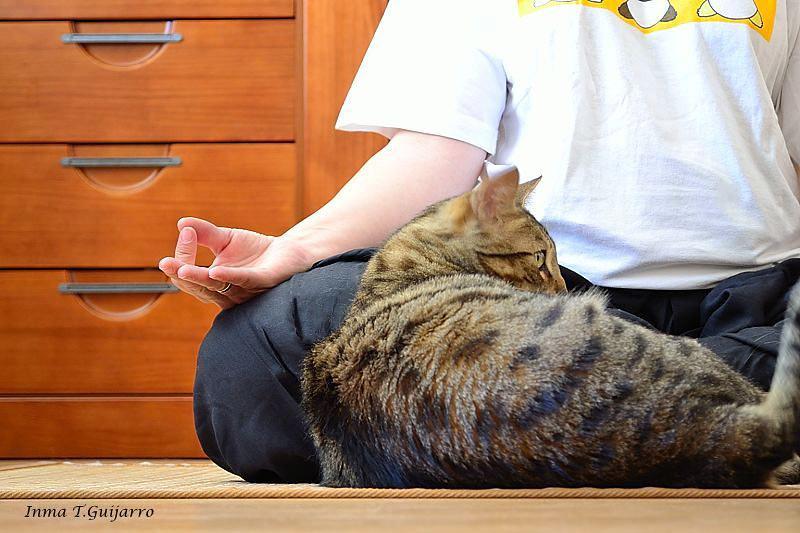 El Yoga también relaja a mi gato