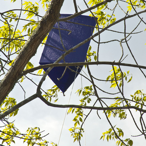 Look for purple traps like this one during EAB Awareness Week.