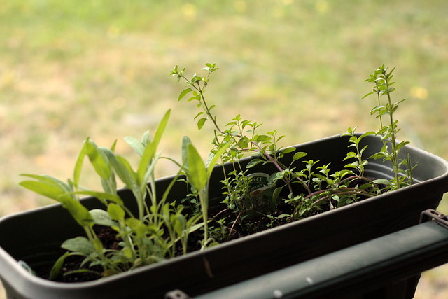 7 Steps to Starting Your Own Herb Garden
