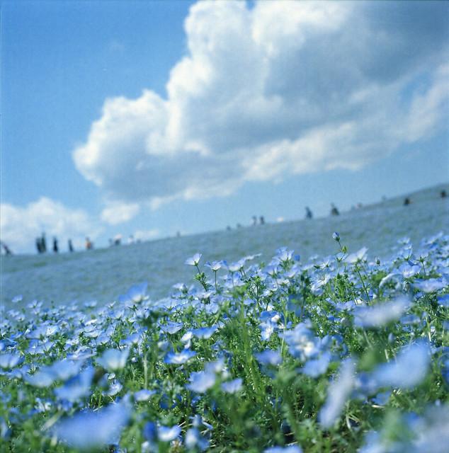 blue / ocean