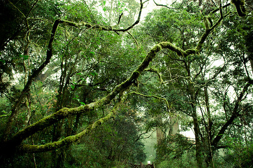 Forests of Alishan-4